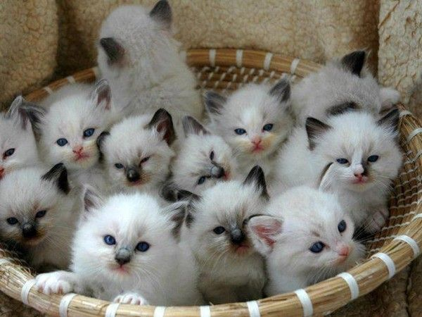 corbeille avec tous pleins de chatons